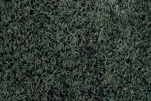 人工芝のアップ